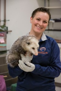 College of Veterinary Medicine Wildlife Clinic